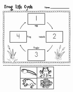 Frog Life Cycle Worksheet Beautiful Frog Life Cycle Unit Ideas for Work