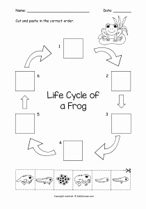 Frog Life Cycle Worksheet Beautiful Life Cycle Of A Frog Cut and Paste