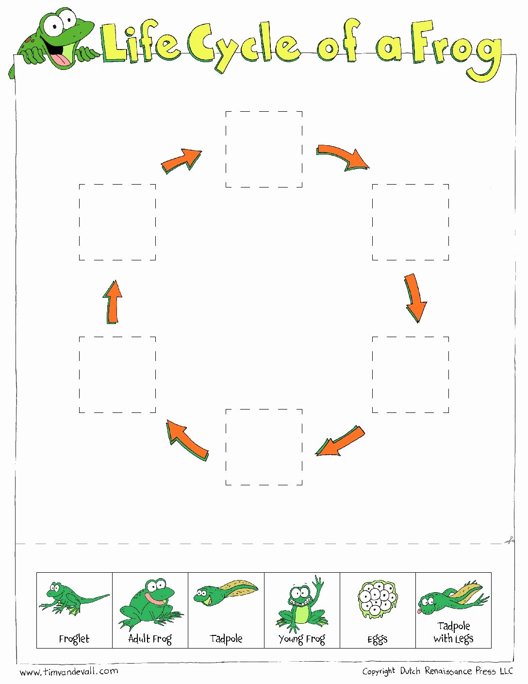 Frog Life Cycle Worksheet Best Of Frog Life Cycle Cut & Paste Tim S Printables