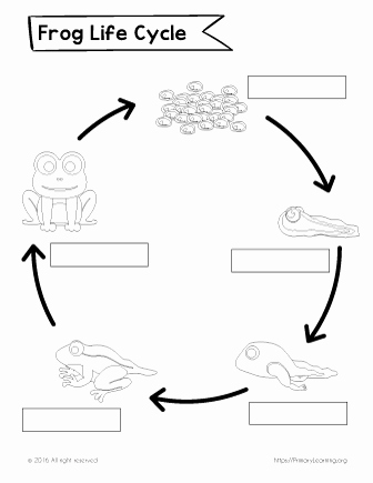Frog Life Cycle Worksheet Best Of Label the Life Cycle Of the Frog