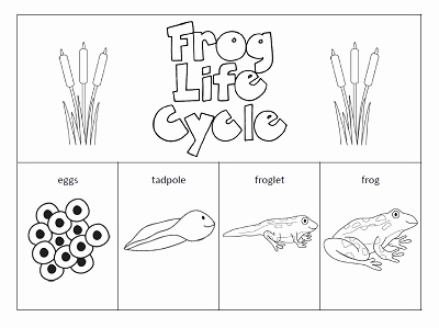 Frog Life Cycle Worksheet Best Of the Paper Maid Frog Life Cycle