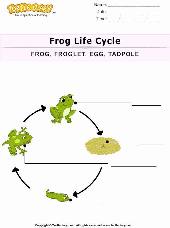 Frog Life Cycle Worksheet Elegant the Life Cycle Of A Frog for Kids Worksheet Turtle Diary