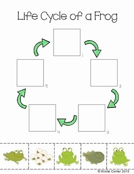 Frog Life Cycle Worksheet Fresh Frog Life Cycle Cut and Paste Worksheet by Lemons and