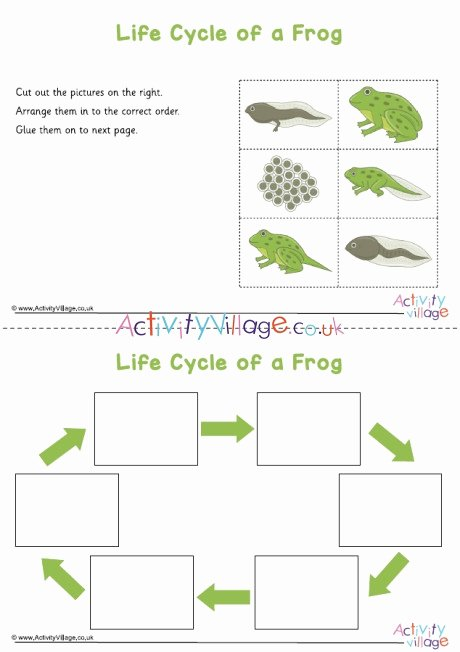 Frog Life Cycle Worksheet Fresh Frog Life Cycle Sequencing Worksheet