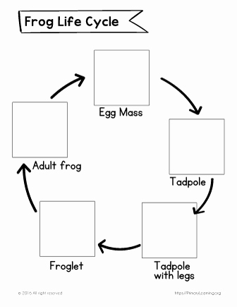 Frog Life Cycle Worksheet Inspirational Frog Life Cycle Cut and Paste