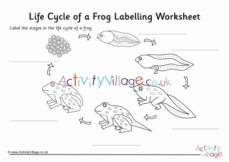 Frog Life Cycle Worksheet Lovely Frog Life Cycle Labelling Worksheet
