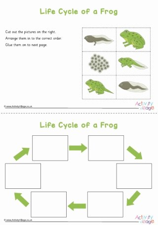 Frog Life Cycle Worksheet Lovely Frog Worksheets