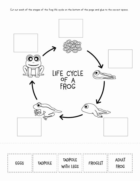Frog Life Cycle Worksheet Luxury I Don T Want to Be A Frog Book Activities – Simple
