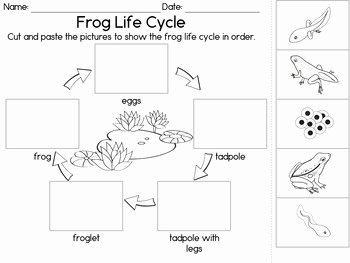 Frog Life Cycle Worksheet Unique Frog Life Cycle 3 Part Cards Observation Journal and
