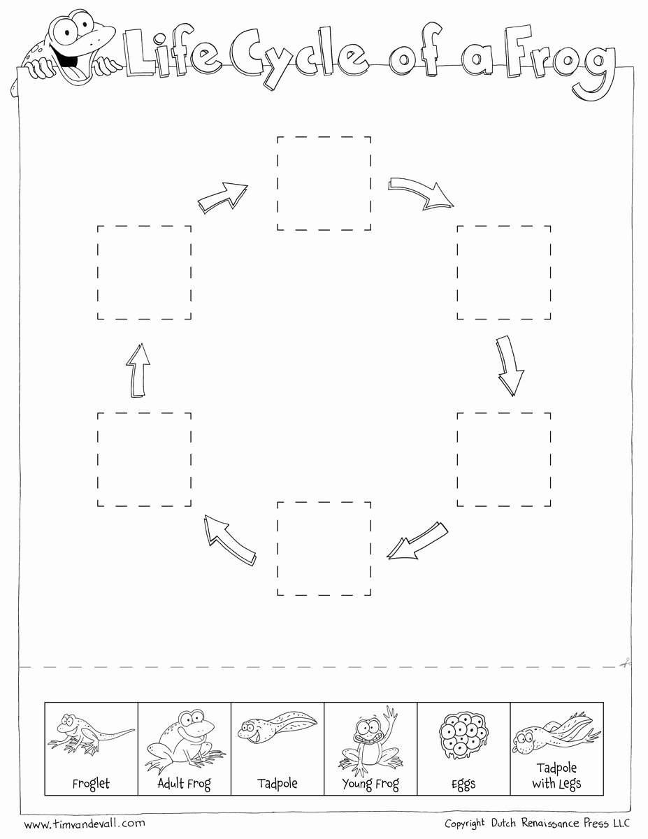 Frog Life Cycle Worksheet Unique Frog Life Cycle Cut & Paste Tim S Printables