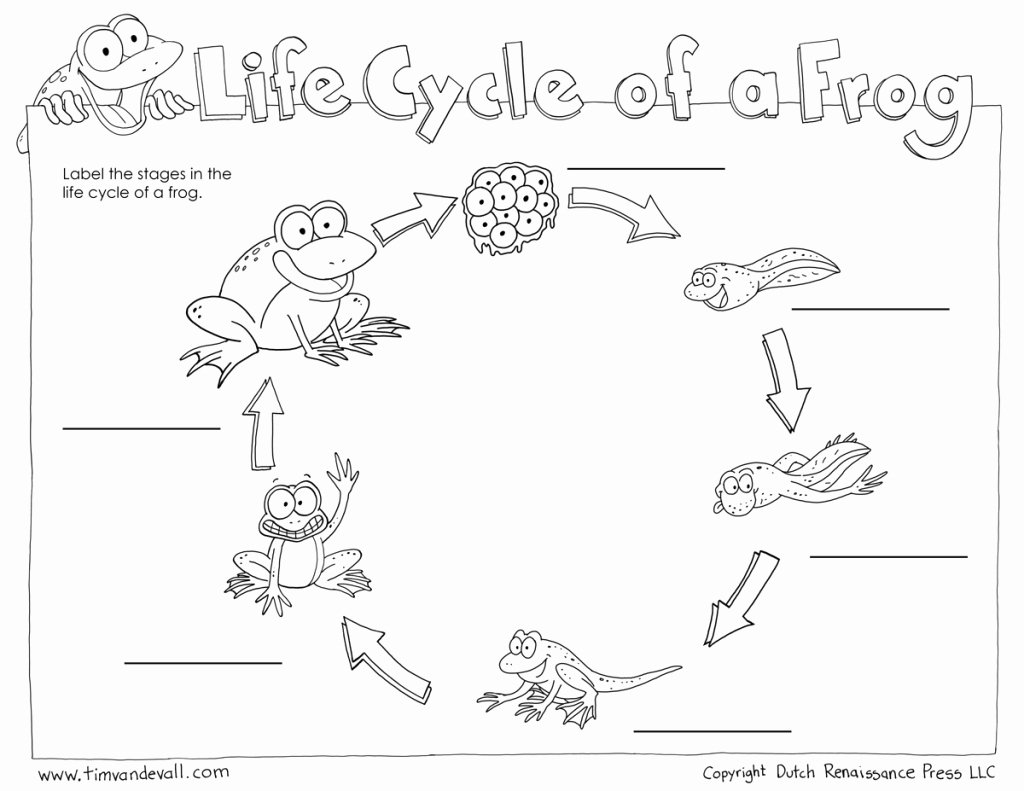Frog Life Cycle Worksheet Unique Life Cycle A Frog for Kids