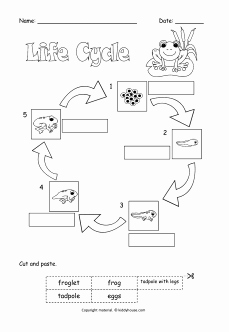 Frogs Life Cycle Worksheet Awesome Life Cycle Of A Frog Cut and Paste to Label