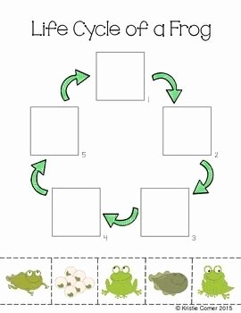 Frogs Life Cycle Worksheet Beautiful 177 Best Preschool Speech Life Images On Pinterest