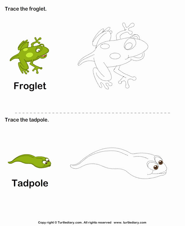 Frogs Life Cycle Worksheet Beautiful Stages Of A Frog Life Cycle for Kids Worksheet Turtle Diary