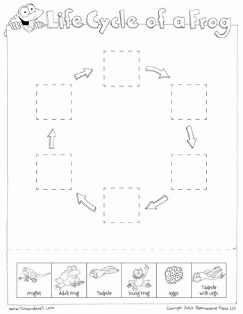 Frogs Life Cycle Worksheet Best Of Frog Life Cycle Cut & Paste Tim S Printables