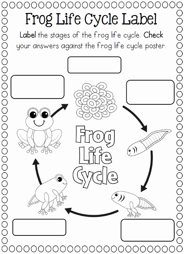 Frogs Life Cycle Worksheet Elegant Crafts Actvities and Worksheets for Preschool toddler and