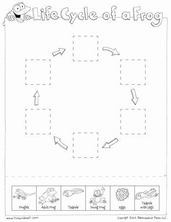 Frogs Life Cycle Worksheet Elegant Frog Life Cycle Cut & Paste Tim S Printables