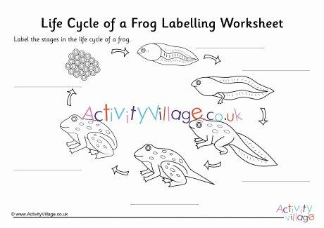 Frogs Life Cycle Worksheet Elegant Frog Life Cycle Labelling Worksheet