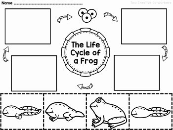 Frogs Life Cycle Worksheet Elegant the Life Cycle Of A Frog Printable Mini Book Worksheets