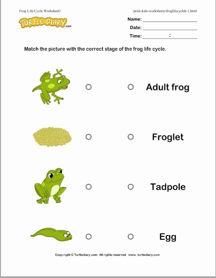 Frogs Life Cycle Worksheet Inspirational Life Cycle Of A Frog Free Educational Videos K 2