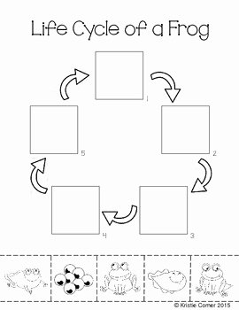Frogs Life Cycle Worksheet Lovely Frog Life Cycle Cut and Paste Worksheet by Lemons and