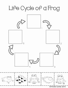 Frogs Life Cycle Worksheet Luxury 1000 Images About Pre K Pond Life On Pinterest