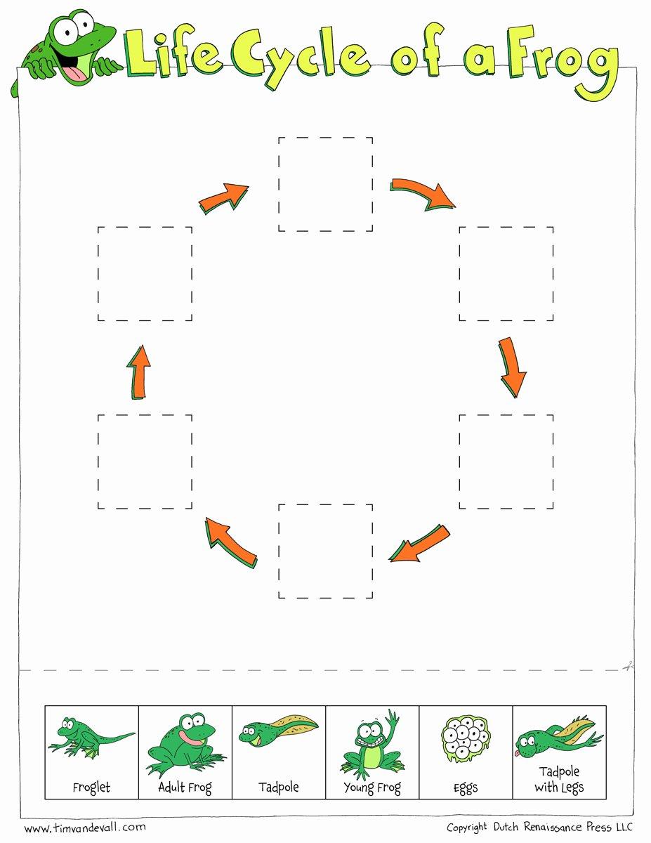 Frogs Life Cycle Worksheet New Frog Life Cycle Cut & Paste Tim Van De Vall
