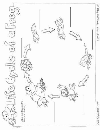 Frogs Life Cycle Worksheet New Frog Life Cycle Worksheet Tim S Printables