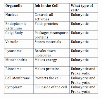 do eukaryotic cells have a nucleus