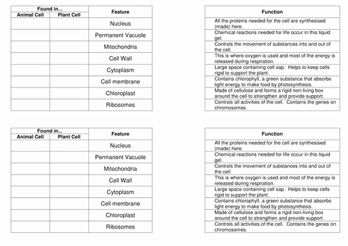 Function Of the organelles Worksheet New organelles and their Functions Match Up Task by Bennettej