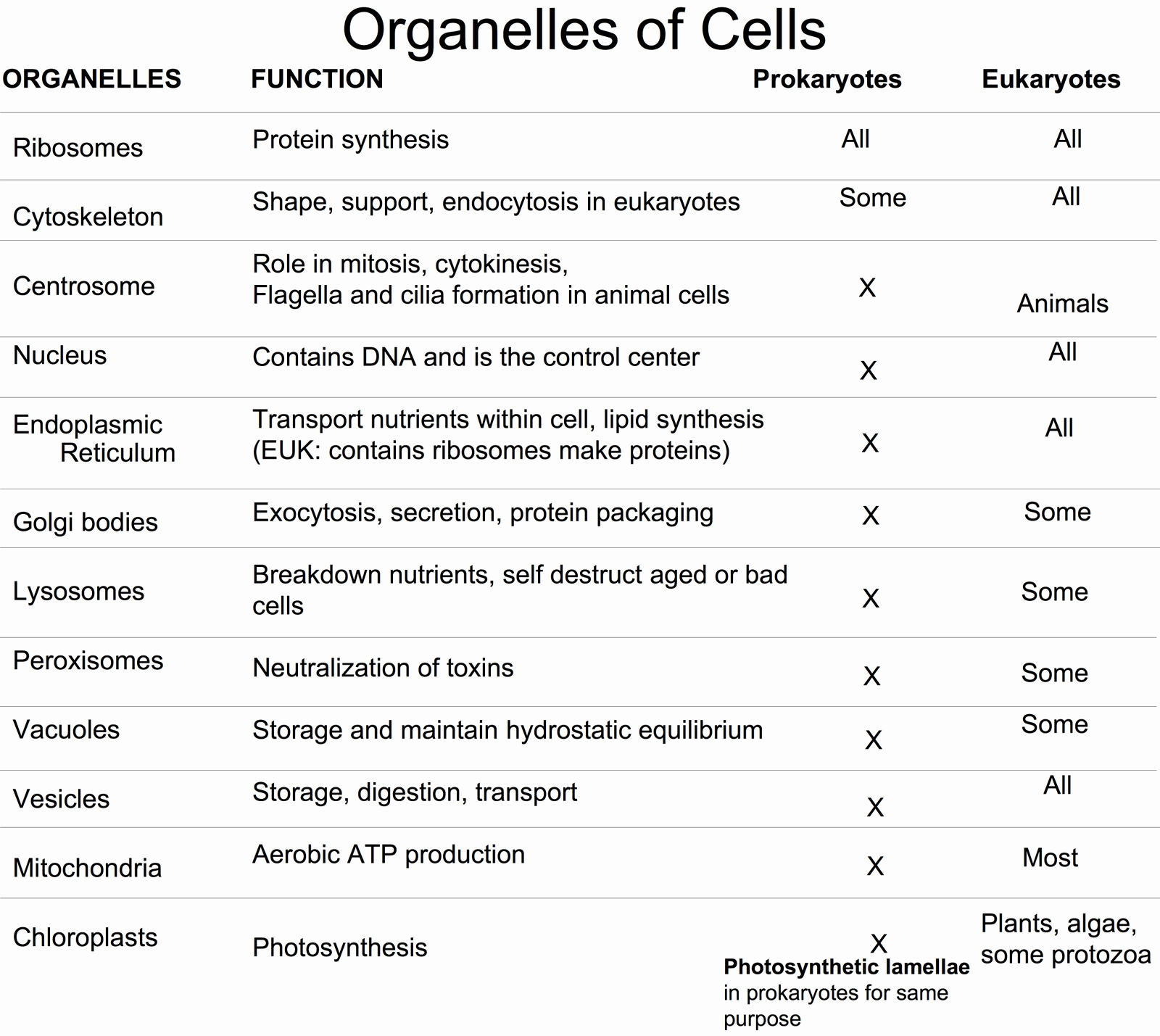 Function Of the organelles Worksheet Unique Biolojoy the Cell