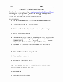 Gel Electrophoresis Worksheet Answers Elegant 8 Gel Electrophoresis