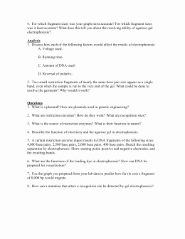 Gel Electrophoresis Worksheet Answers Fresh Gel Electrophoresis Virtual Lab Worksheet Answer Key
