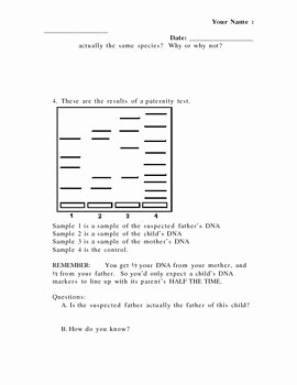 Gel Electrophoresis Worksheet Answers Lovely Pcr Gel Electrophoresis Practice Worksheet by Grace