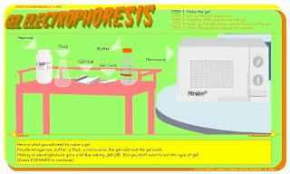 Gel Electrophoresis Worksheet Answers Luxury Bio 4 Beginners 5 Virtual Labs and More the Genetic