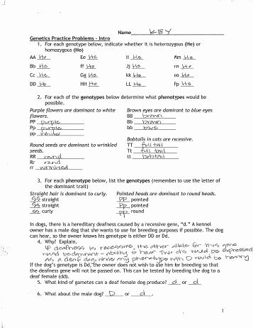 Genetics Practice Problem Worksheet Beautiful Genetics Practice Problems Worksheet Key
