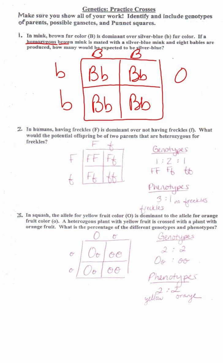 Genetics Practice Problems Simple Worksheet Elegant Genetic Review for Test