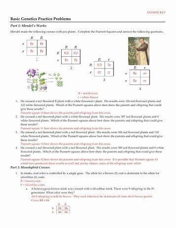 Genetics Practice Problems Simple Worksheet Fresh Genetics Practice Problems – Simple Er Worksheet