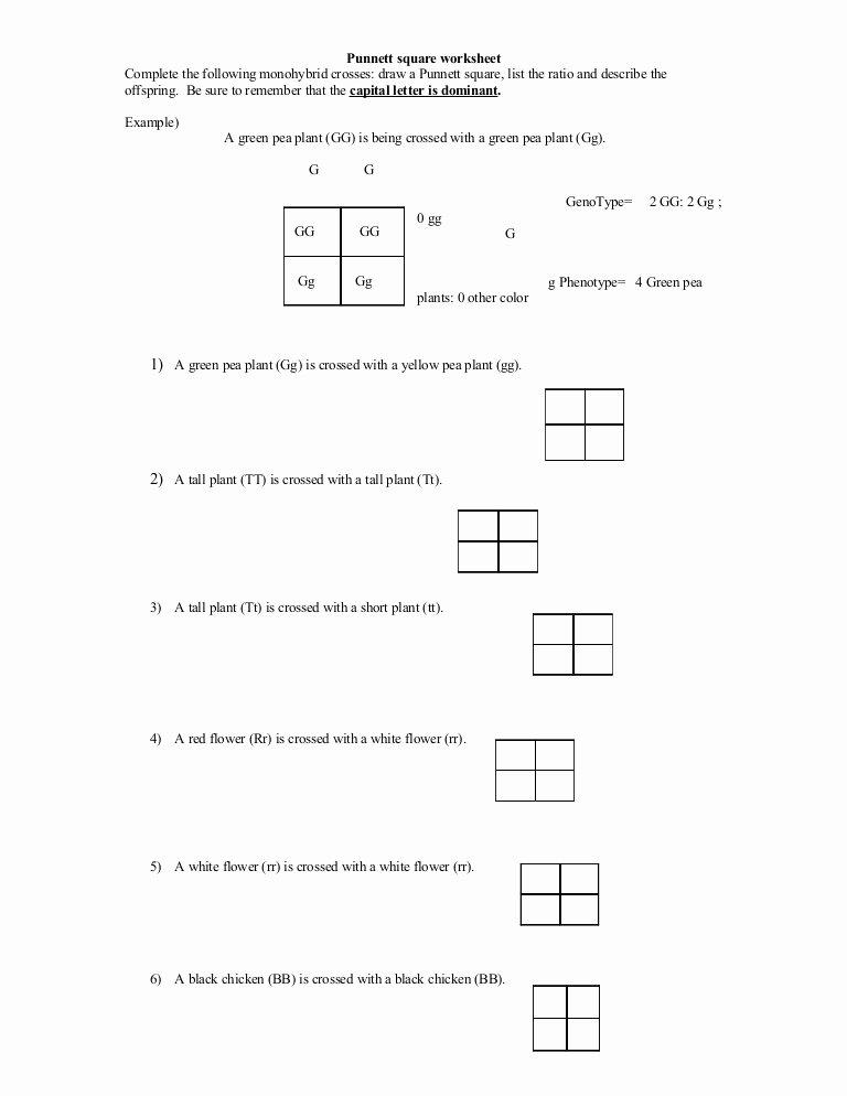 Genetics Practice Problems Worksheet Answers Fresh Punnett Square Worksheet