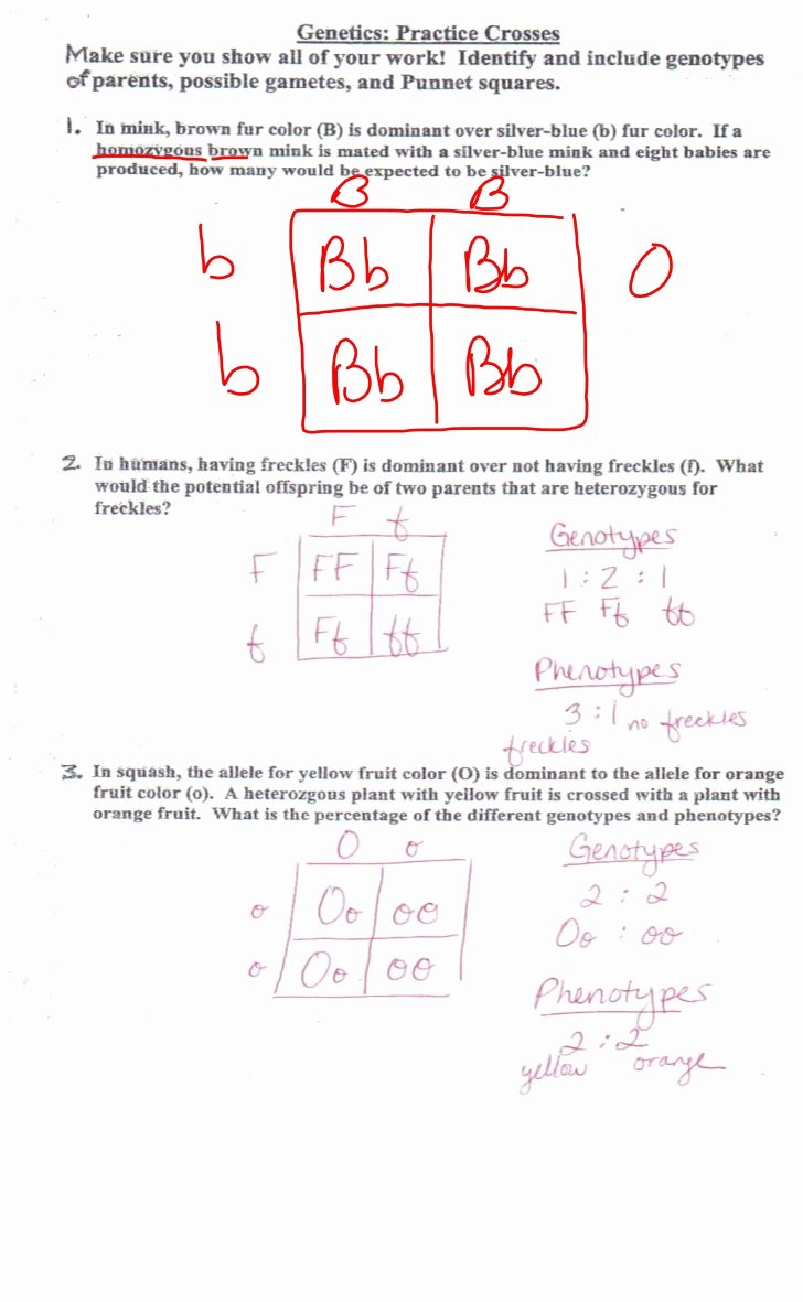 Genetics Practice Problems Worksheet Answers Luxury Genetic Review for Test