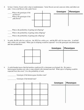 Genetics Practice Problems Worksheet Awesome Genetics Practice Problems Worksheet In Plete Dominance