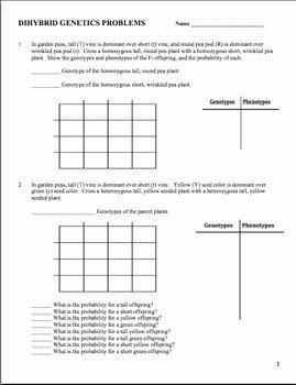 Genetics Practice Problems Worksheet Beautiful Genetics Dihybrid Two Factor Practice Problem Worksheet