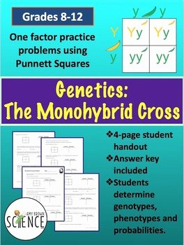 Genetics Practice Problems Worksheet New Monohybrid Cross Punnett Square Worksheet by Amy Brown