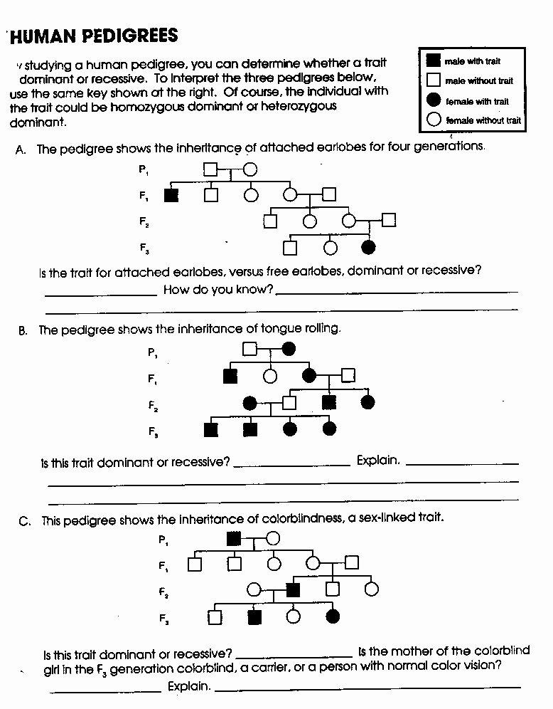 Genetics Problems Worksheet Answer Key Awesome 14 Best Of Pedigree Worksheet with Answer Key