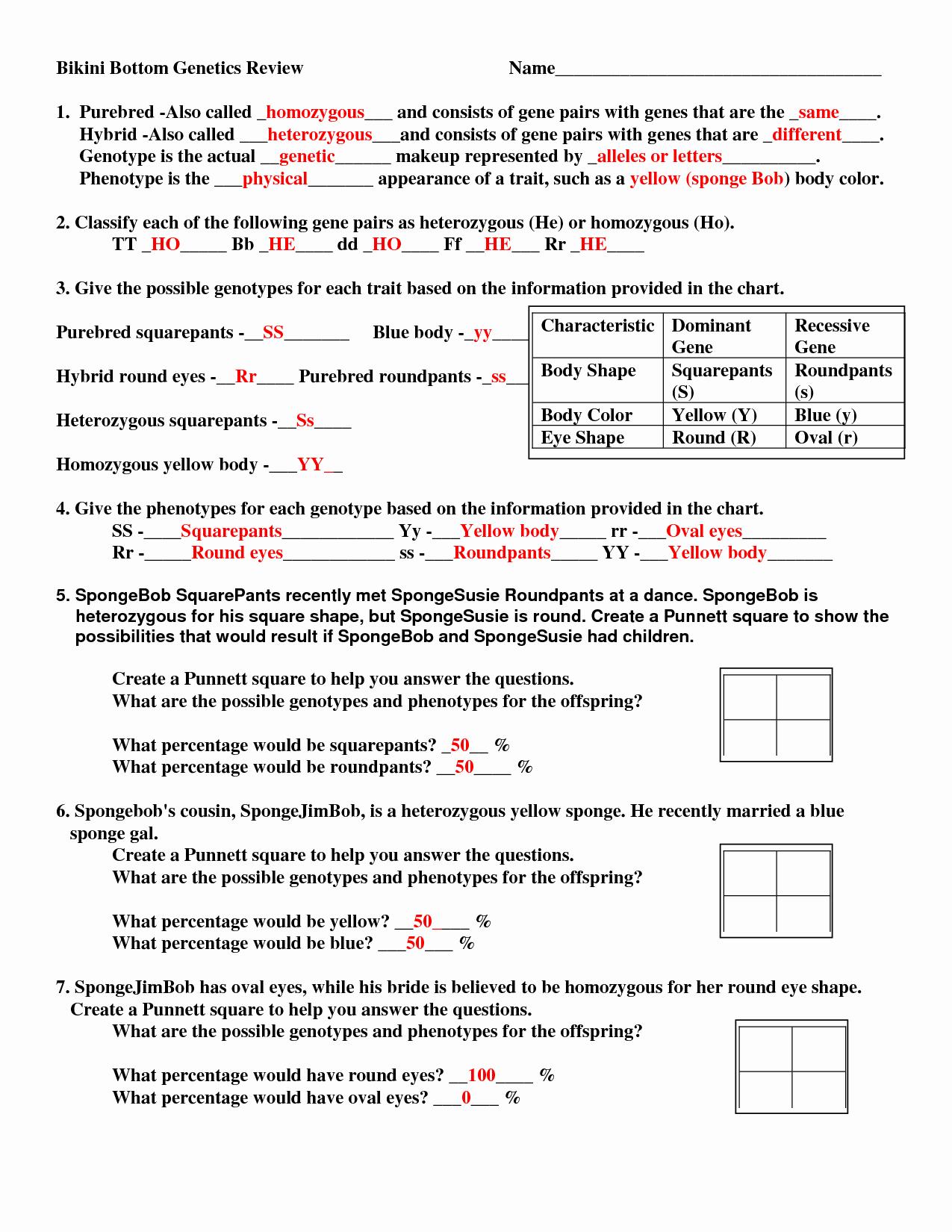 post genetic punnett squares worksheets