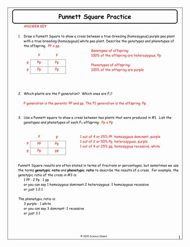 Genetics Problems Worksheet Answer Key Inspirational Punnett Square Practice Worksheet with Answers
