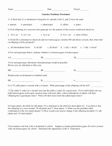 Genetics Problems Worksheet Answer Key Lovely Genetics Problems – Worksheet 1