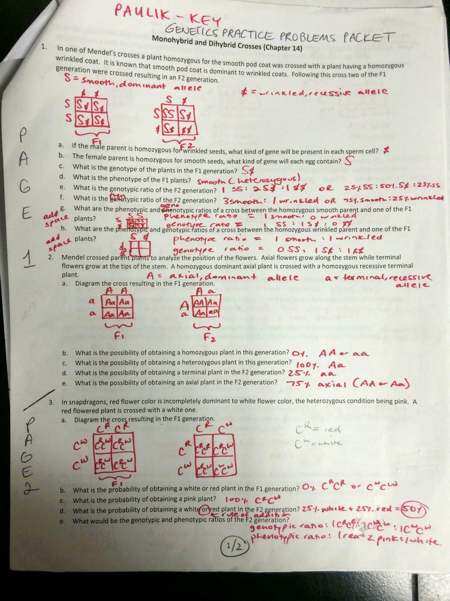 Genetics Problems Worksheet Answers Inspirational Punnett Square Worksheet 1 Answer Key