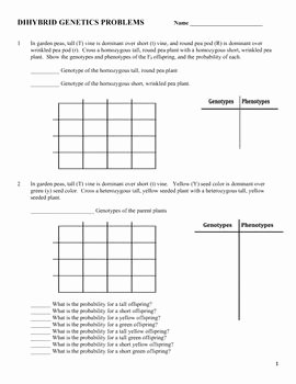 Genetics Problems Worksheet Answers New Genetics Dihybrid Two Factor Practice Problem Worksheet