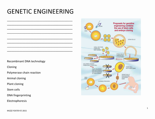 Genetics Worksheet Answer Key Lovely Genetic Engineering Worksheet and Answer Key by